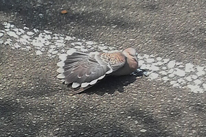 P906i 鳩の羽干し(2009.07.30)