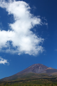 Canon EOS20D & Canon EF100mm F2.8 マクロ USM 岩本山公園(2008.03.22)