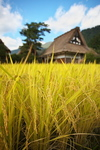 白川郷(2009.09.19)
