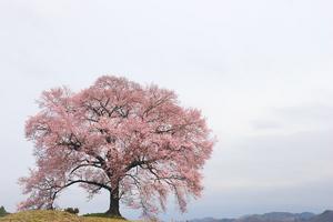 Canon EOS20D & SIGMA 18-50mm F2.8 EX DC 韮崎市