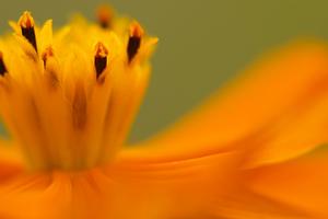 Canon EF100mm F2.8 マクロ USM 花の都公園