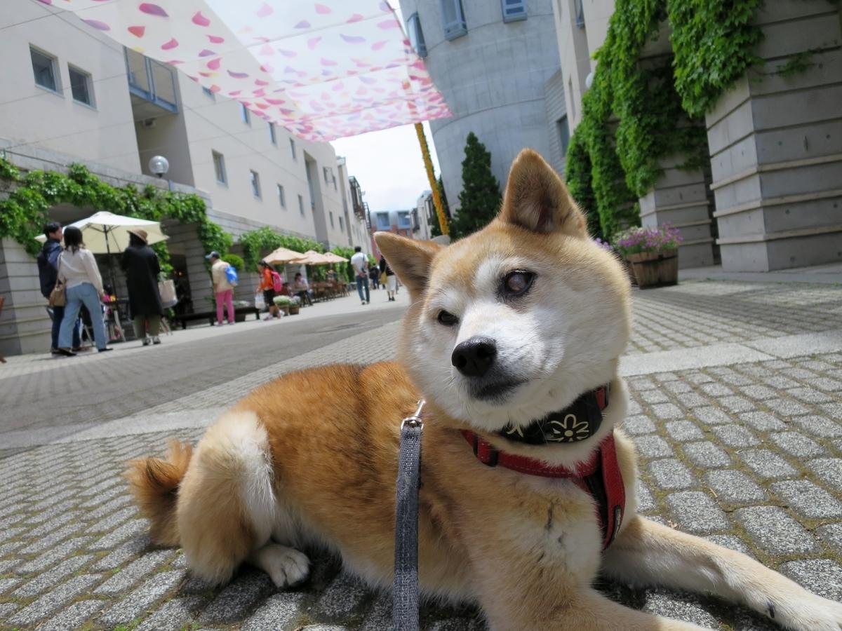 f:id:dual-yatsugatake-hygge-life:20190519143007j:plain