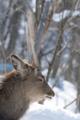 昨年の旭山動物園のエゾシカ