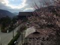 善光寺と桜