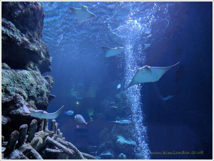 ロンドンの水族館