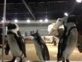 ペンギン部