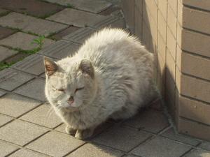 山王駅近くの猫