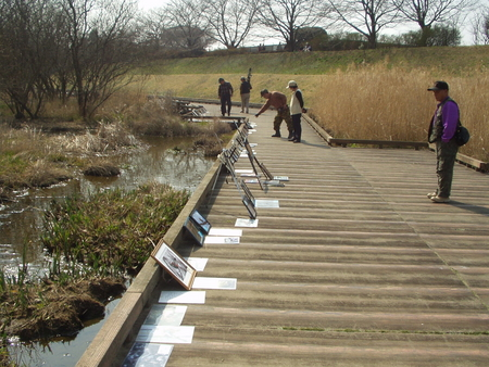 柳瀬川・金山調節池①2007.3.4