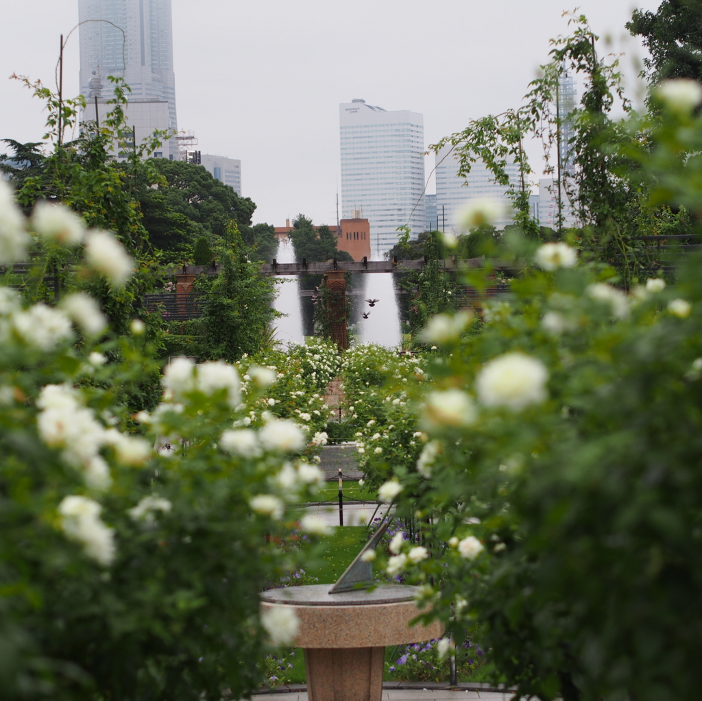 山下公園の沈床花壇
