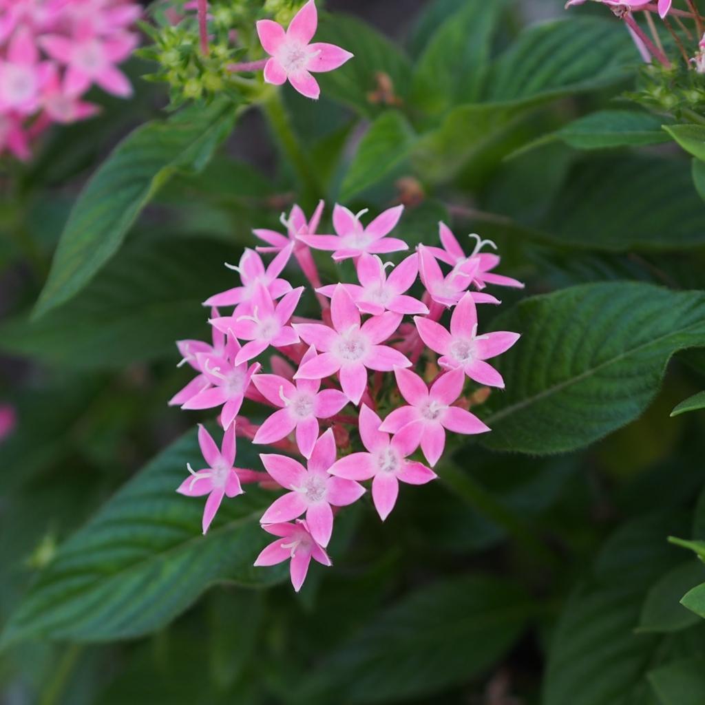 山下公園の花