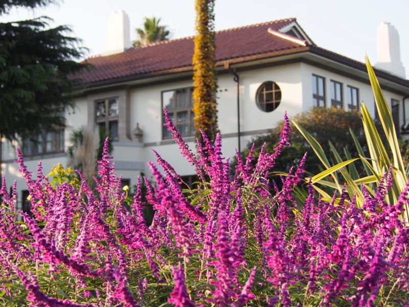 111番館前の花|港の見える丘公園の秋の花々