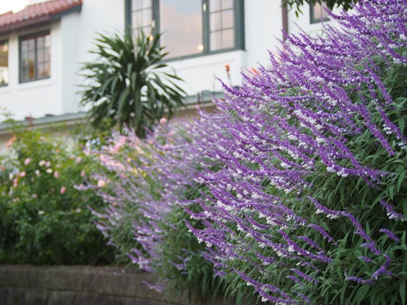 イギリス館をバックに|港の見える丘公園の秋の花々