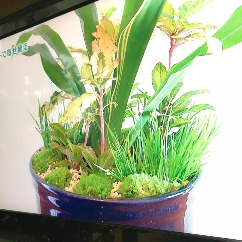 和の観葉植物