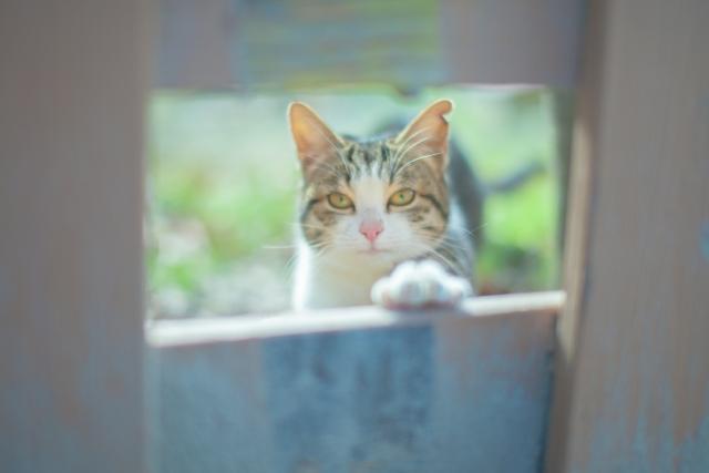 """""""バイクの野良猫被害への対策""""を、7歳からずっと猫と暮らしつづける私が考えた結果"""