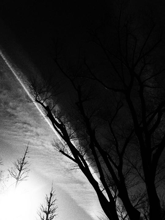 空と雲とケヤキ