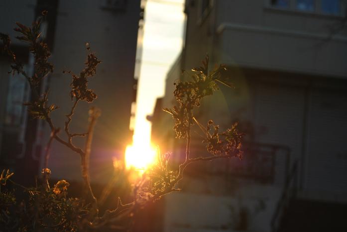 隙間から太陽