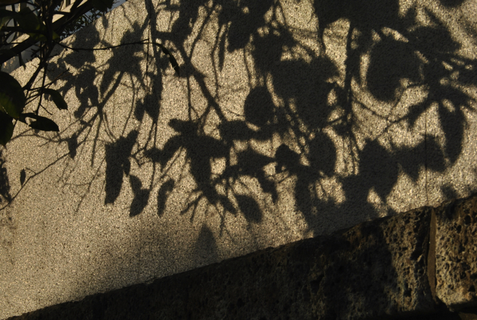 レモンの影