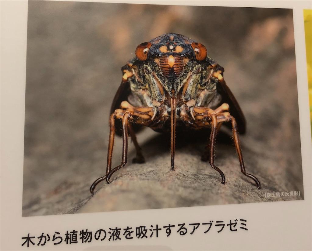 f:id:e-tomatsu:20180904222017j:image