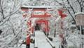 京都新聞写真コンテスト 雪化粧