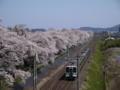 大河原の人目千本桜と快速列車