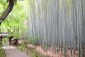 京都新聞写真コンテスト 竹の輝き