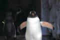 『ここは俺に任せてお前たちは先に行け!』@旭山動物園