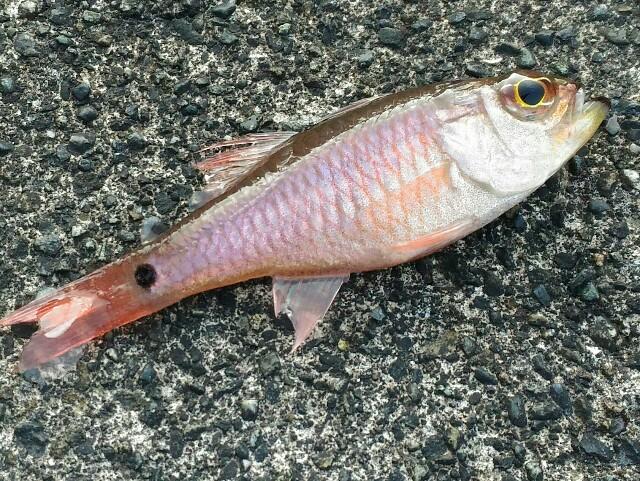 f:id:eatmorefish:20171111122504j:plain