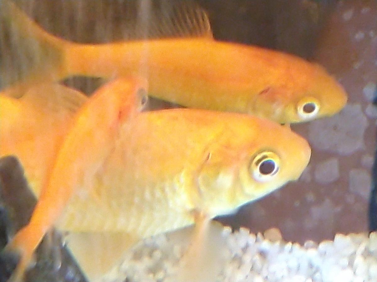 f:id:eatmorefish:20191023200125j:plain
