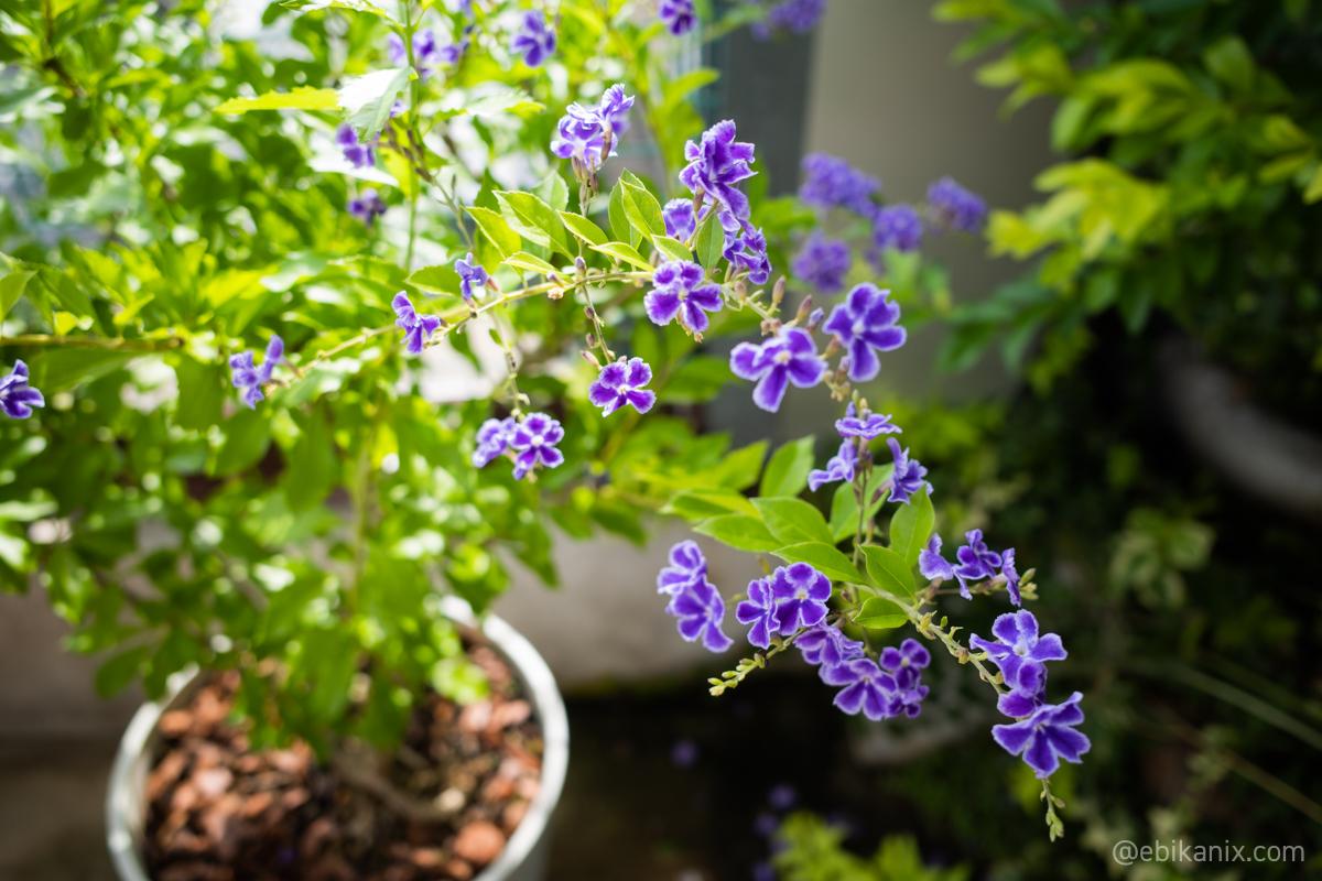 かわいい紫の花