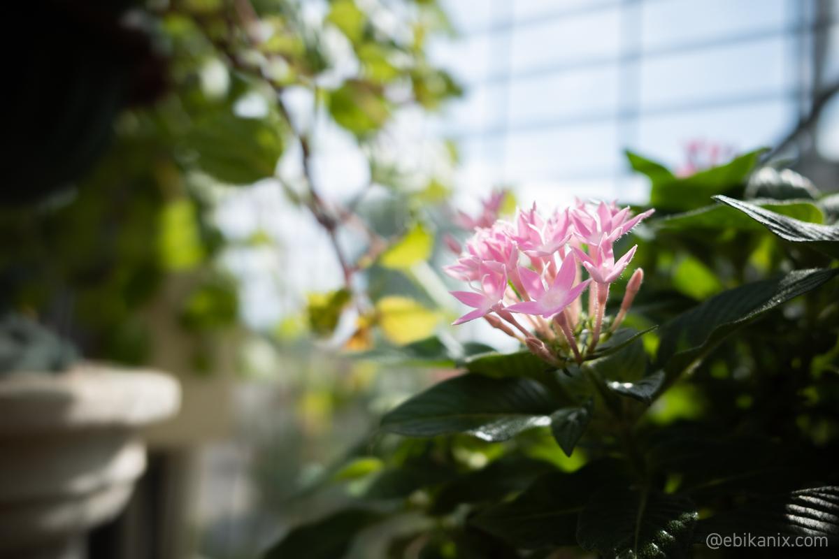 強そうなピンクの花