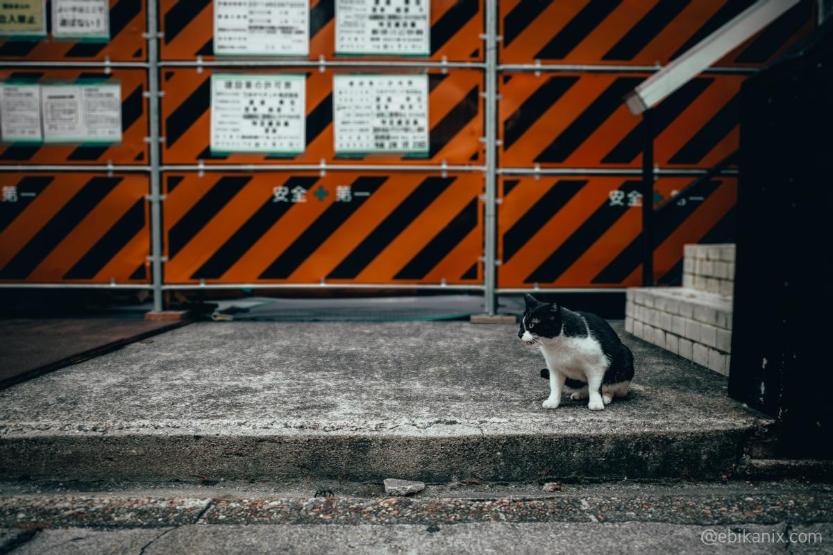 工事現場に猫