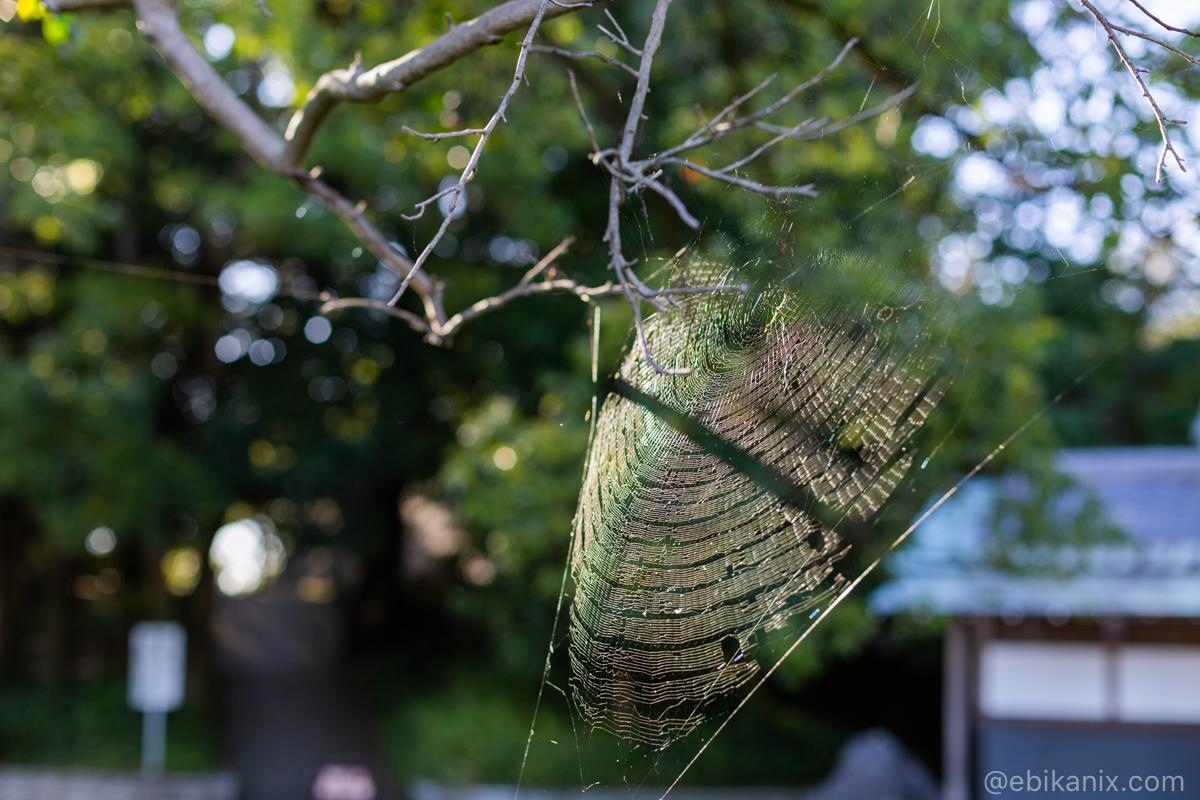 光る蜘蛛の巣