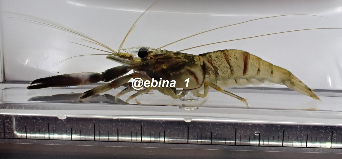 f:id:ebina-1:20200826160916j:plain