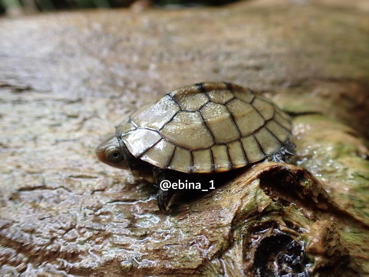 f:id:ebina-1:20200829152927j:plain