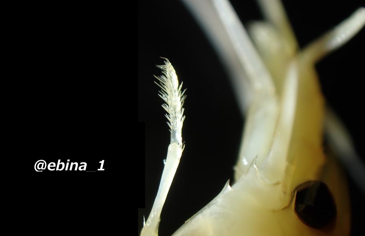 f:id:ebina-1:20201219004007j:plain