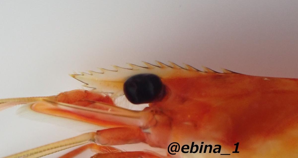 f:id:ebina-1:20210129161757j:plain