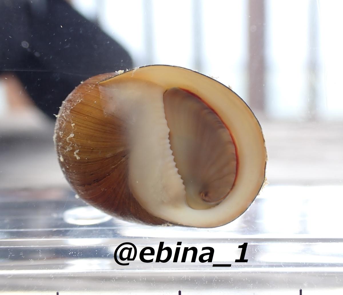 f:id:ebina-1:20210427234549j:plain