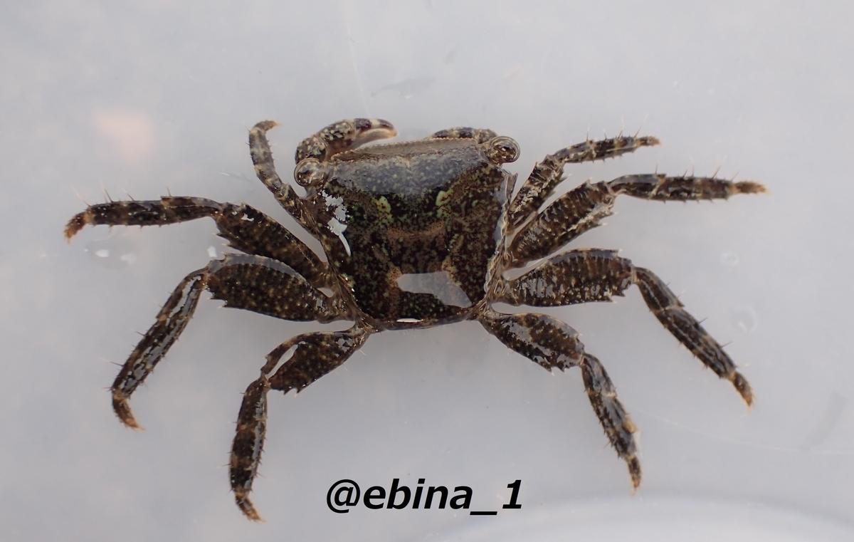 f:id:ebina-1:20210428175440j:plain