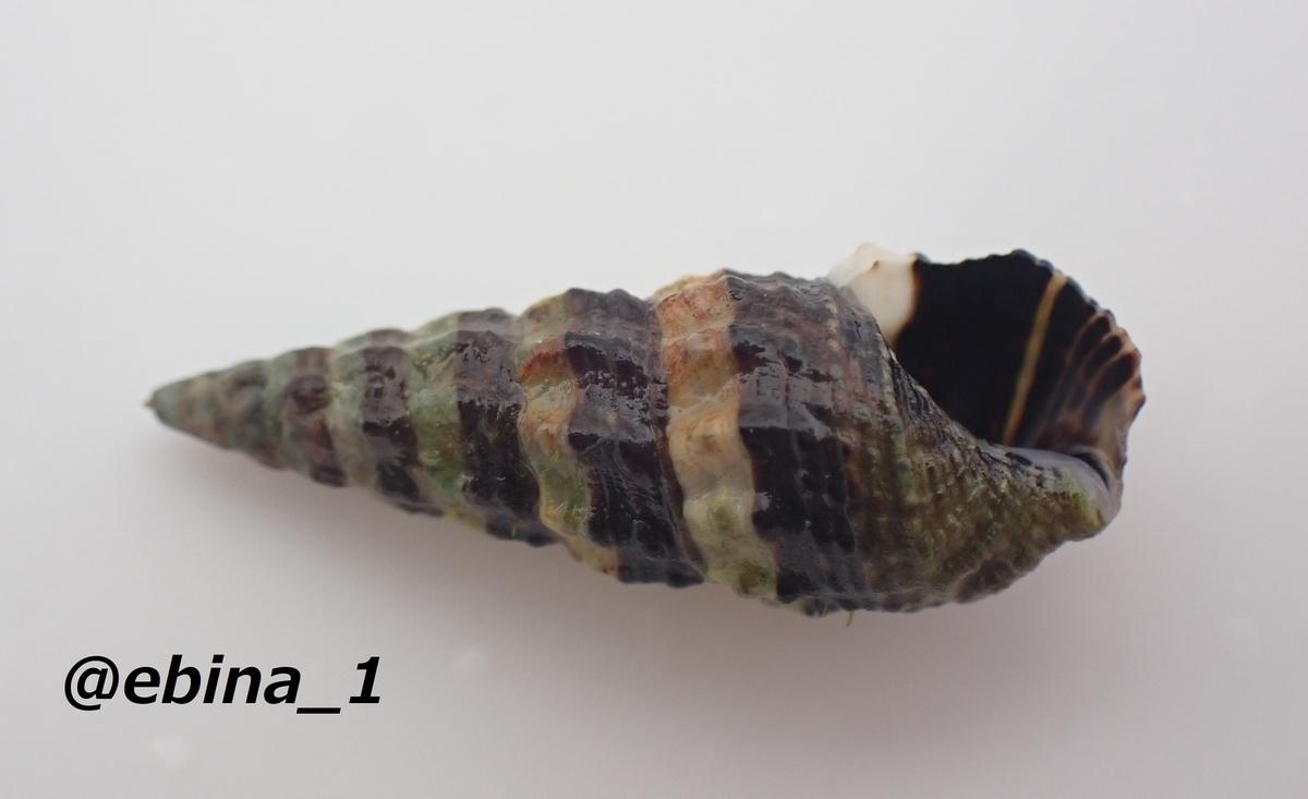 f:id:ebina-1:20210428182257j:plain