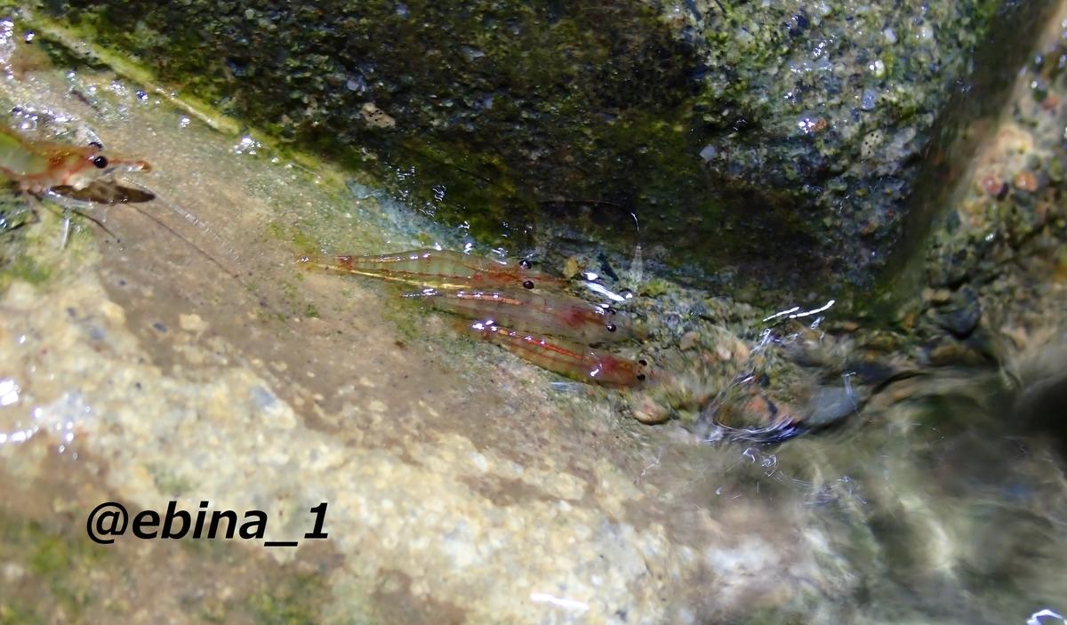 f:id:ebina-1:20210501032228j:plain