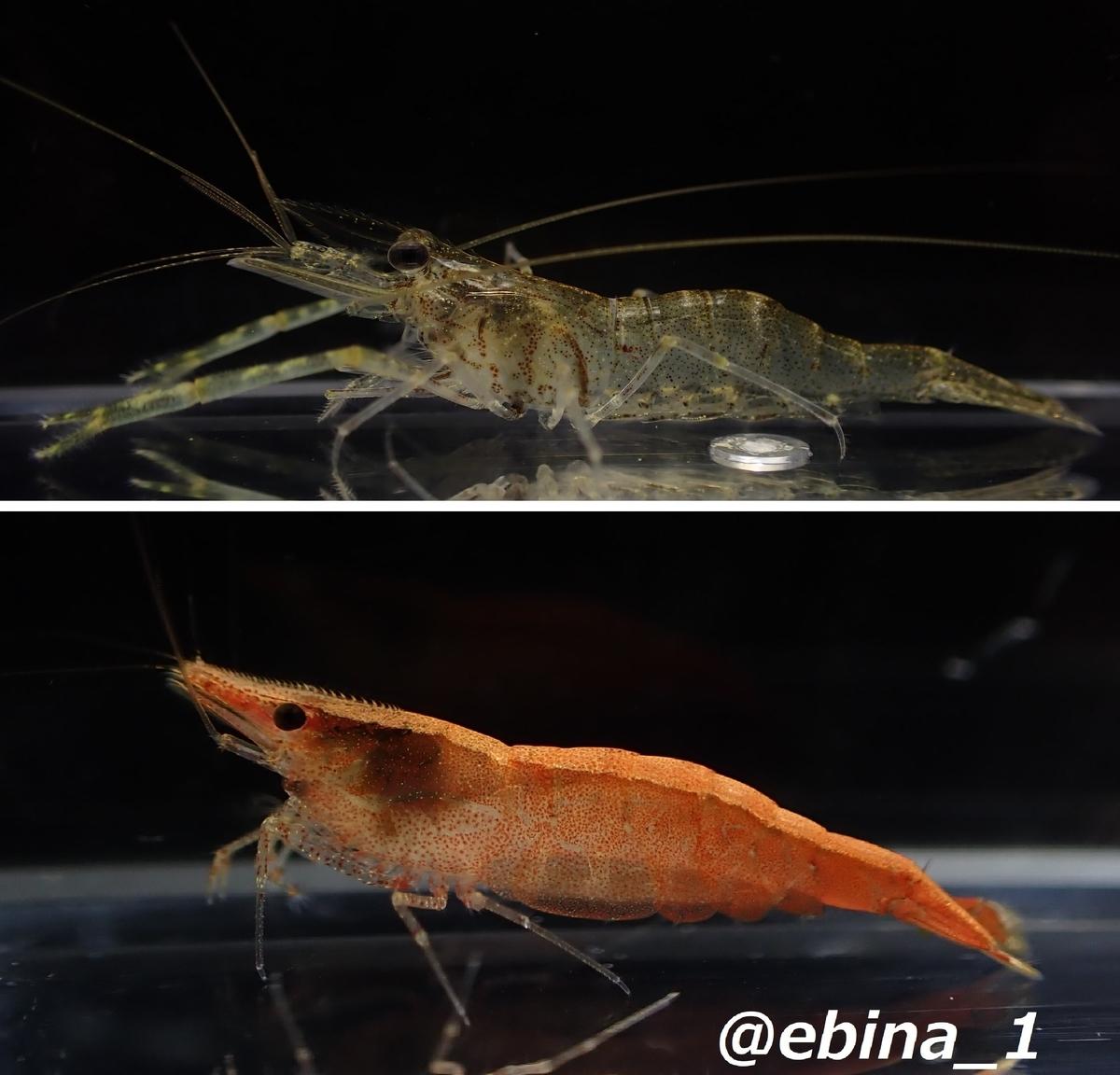 f:id:ebina-1:20210501180855j:plain