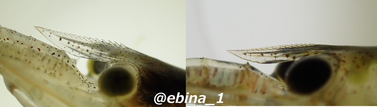 f:id:ebina-1:20210511164839j:plain
