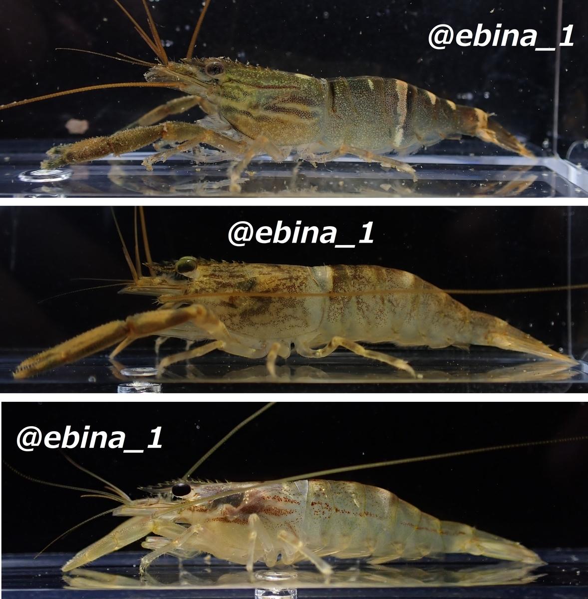f:id:ebina-1:20210511203046j:plain