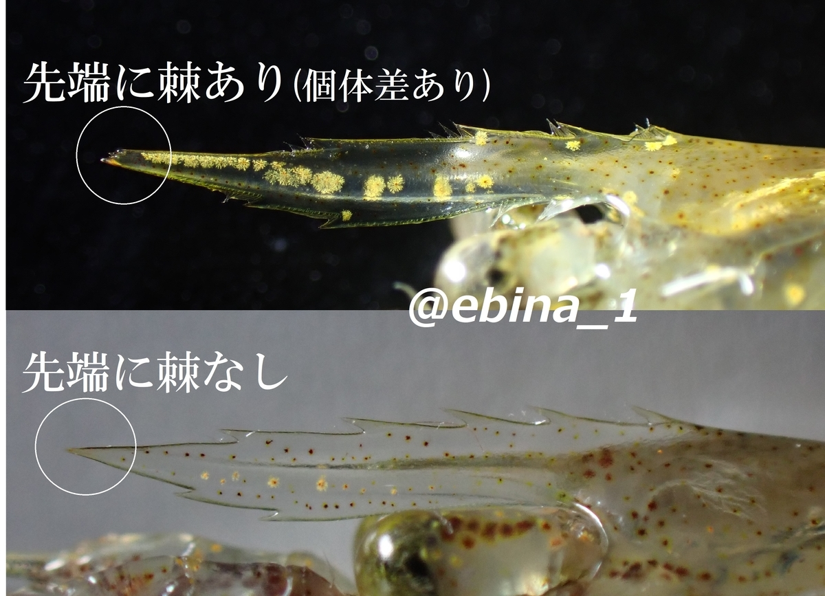 f:id:ebina-1:20210513185617j:plain
