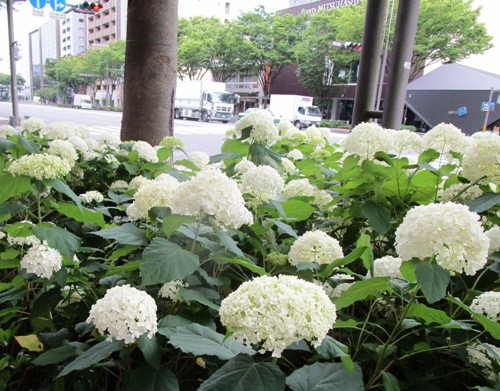 f:id:eco-tsu-station:20170622062416j:image