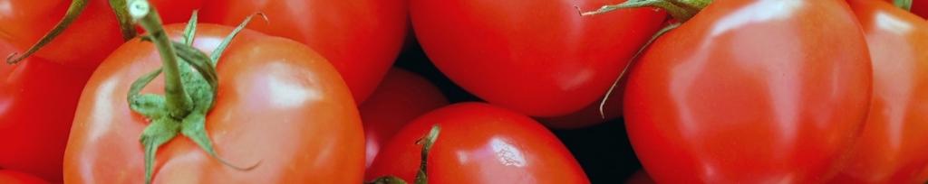 トマティーナ用トマト画像