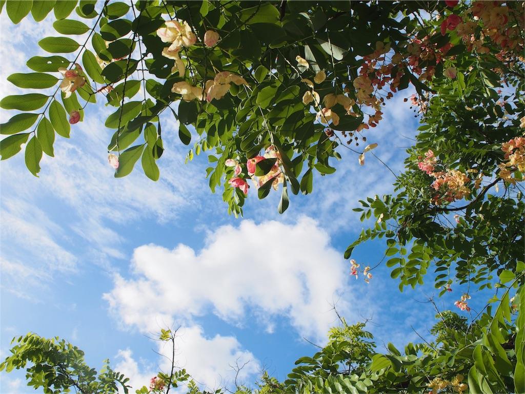 ケアンズの青い空と綺麗な緑