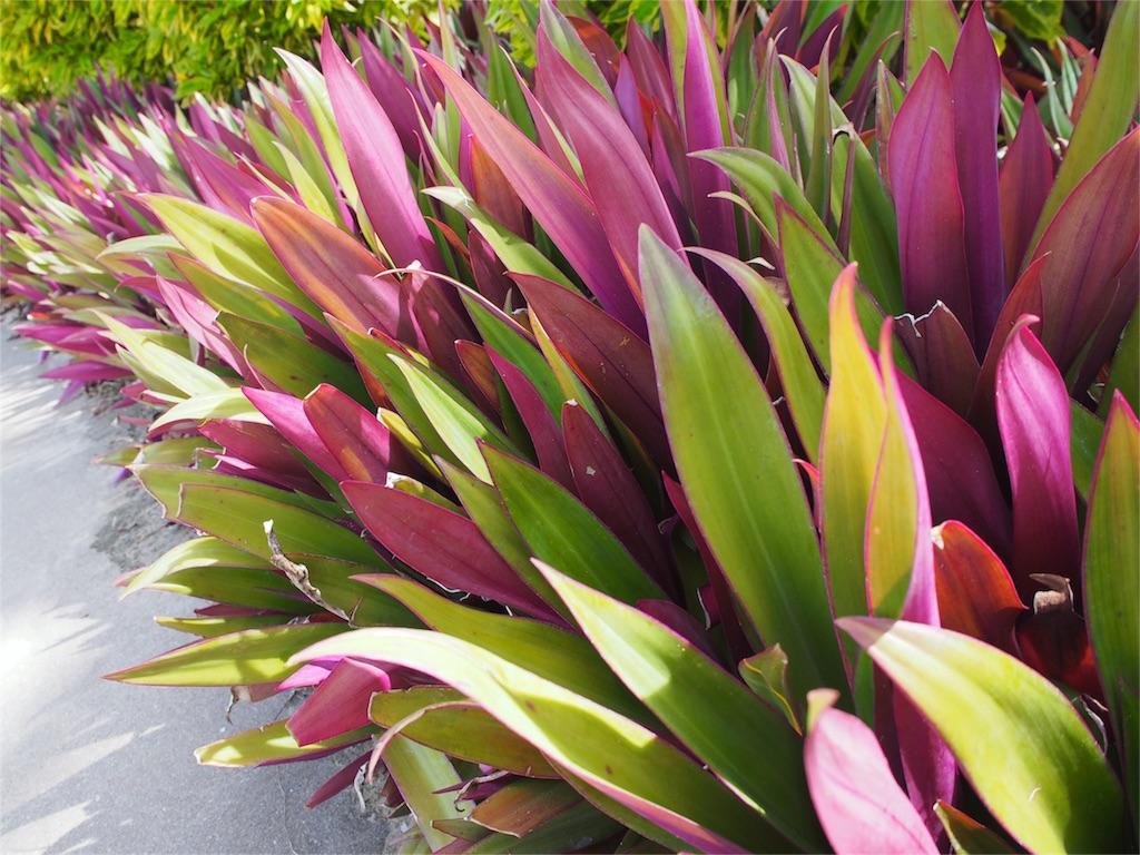 日差しが当たって嬉しそうな植物