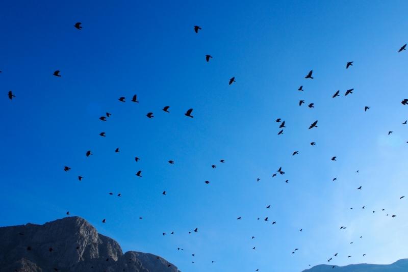 自然がたくさんで鳥も嬉しそう