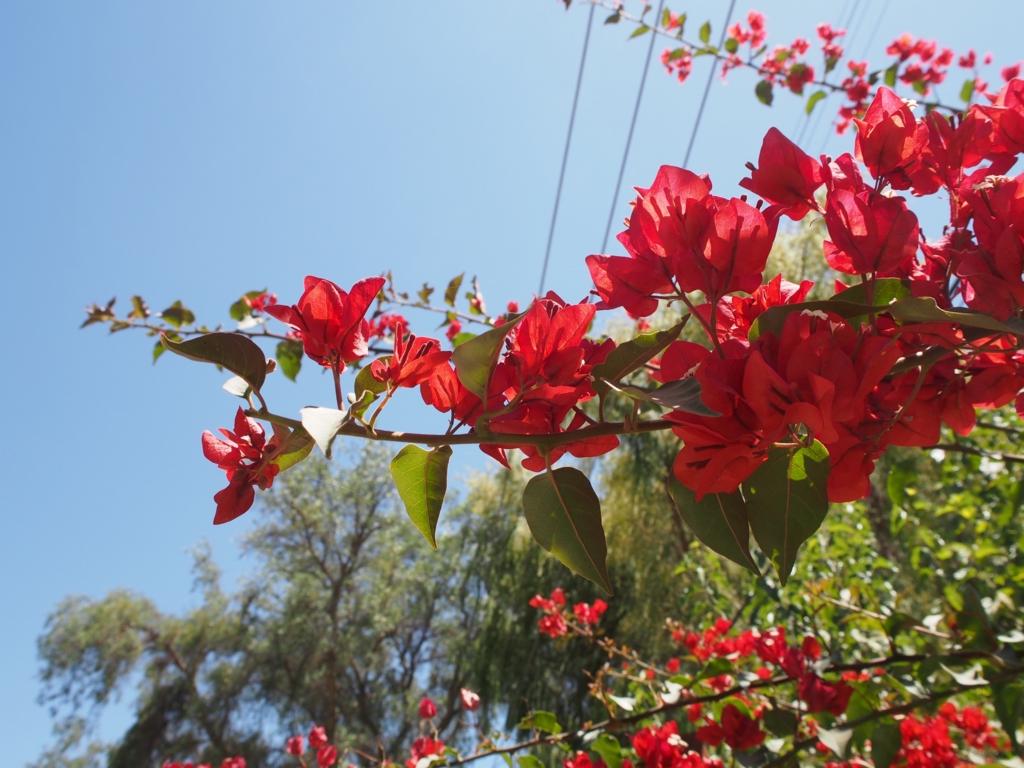 工場へ行く途中に見つけた綺麗なお花